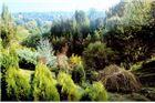 Arboretum Lisičine – turistička destinacija
