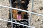 U virovitičkom azilu 60 pasa čeka vlasnike