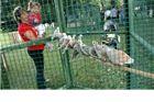 Golub izložio stotinu papigica, golubova i kunića