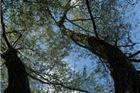 Fotogalerija by Rudi Vanđija: Kad je Drava bila plava