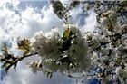 Fotogalerija. Pozdrav proljeću by Rudi Vanđija
