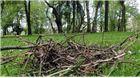 Vatrogasci vodenim topovima vranama ruše gnijezda