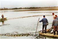 Ukrali 30 kilograma konzumne ribe, a čuvara bacili u potok
