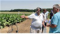 Na pješčanim tlima u Podravini i Slavoniji duhan nema alternativu