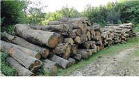 Korisnici pa�njaka ostali bez drveta vrijednog pet milijuna kuna