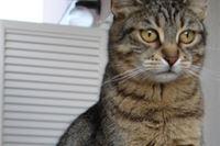 Kad mačka zove vatrogasce