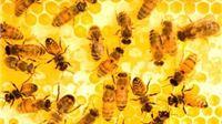 Nagrada  za najboljeg europskog pčelara 4 tisuće eura