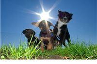 Obilježavanje Svjetskog dana zaštite životinja umjesto na Igralištu za pse održat će se u Dječjem vrtiću i OŠ Vladimir Nazor