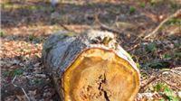 Država će trošarinama ugroziti kogeneracije na biomasu i otjerati ulagače