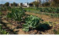 Raspisan Javni poziv o iskazivanju interesa za dodjelu gradskih vrtova