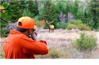 Protuzakonito odstrijelili jelena starog oko dvije godine