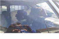 Foto i video: U autu je vozio tele a onda mu na cesti pukla guma