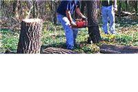 Pitomački policajci ekspresno pronašli kradljivce drva