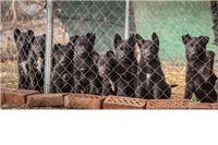Prva koordinacijska radna skupina za poticanje primjene Zakona o zaštiti životinja osnovana u Virovitičko-podravskoj županiji