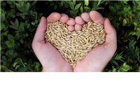 Objavljena konačna rang lista projekata malih poljoprivrednika (6.3.1.) koji će se financirati sa ukupno 151 milijun kuna
