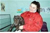 Psi iz ilegalnih borbi u skloništu Beli Manastir: Jedan uginuo, dvije ženke pothranjene, mužjak s ranama