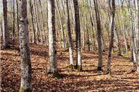 Utjecaj štetnih organizama i klimatskih promjena na šumske sastojine