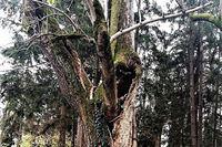 Evo kako dobri gospodari brinu o bolesnim stablim u svojim parkovima
