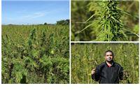 Uspješan biznis: Na prerađivanju čitave biljke otvorilo bi se mnogo radnih mjesta