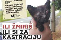 Udruge za zaštitu životinja otkrivaju bolnu stvarnost kako bi svi otvorili oči:  Ili žmiriš ili si za kastraciju