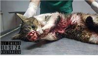 Trideset udruga ukazuje na pristran stav veterinarskih organizacija, koji ne podržava većina veterinara: Riješimo uzroke napuštanja životinja, a ne posljedice