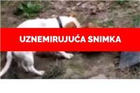 Horor u Belom Manastiru: u skloništu gdje se odvoze životinje s područja Slatine psi doslovce jedu jedni druge