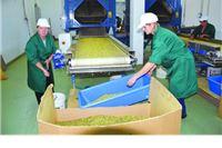 Izvoz ljekovitog bilja povećan za 25 posto