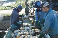 Proizvodimo upola manje slatkovodne ribe nego prije rata