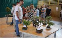 Virovitički uzgajivači izložili 39 minijaturnih drvaca starih od 6 do 60 godina Japanski veleposlanik oduševljen.