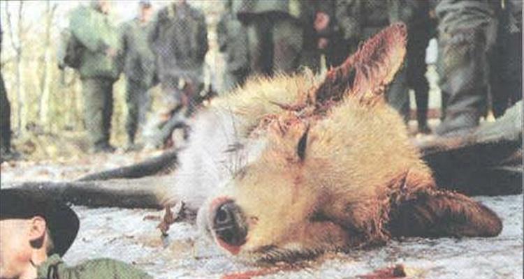 AWAP-ovo pismo gradona�elniku Virovitice, medijima, gra�anstvu u vezi planiranog lova na lisice