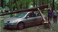 U suhpoljskom parku stabla  padala na osobna vozila