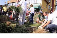 """Na """"Dan borbe protiv ambrozije"""" sakupljeno 126.500 stabljika ambrozije"""