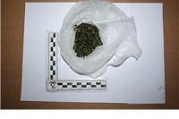 Uhvatili ga u parku s 10,8 grama opojne droge
