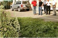 U Virovitici oduzeta droga vrijedna oko 250.000 kuna