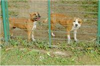 Lopovi ukrali 9 štenaca vrijednih 28.000 kuna