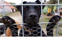 Zbog hladnoće psi kopaju rupe u zemlji da se zaštite