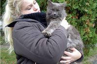 Pronađena siva perzijska mačka