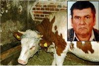 Krava pritisnula muškarca (56) koji je potom umro