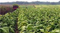 Proizvođači duhana Ministarstvu poljoprivrede vračaju vaučere