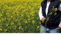 Zbog jesenske suše zaorano 70 posto površina pod uljanom repicom