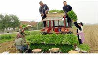 Na 4200 hektara započela sadnja duhana