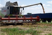 Čobanković nema zakonsko pravo intervenirati u standard pšenice?
