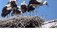 Potpisivanje ugovora za projekt - Zaštite i očuvanja bijele rode na području VPŽ