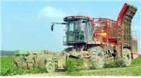 Viro preradio 10 % od 550.000 tona očekivanog priroda šećerne repe