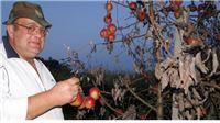 Bakterijska pošast uništila jabuke vrijedne 400.000 kuna