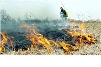 Vatra progutala dvadesetak hektara raslinja i šikara
