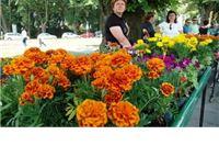 Više cvijeća manje smeća - podijeljeno 3000 cvjetnih sadnica + Fotogalerija by Rudi Vanđija