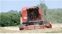 Otkup dobro napreduje, ne očekuju probleme s isplatom žita