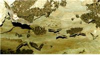 Zbog 'eksplozije' kukaca na Papuk doletjele tisuće novih šišmiša