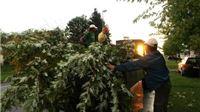 Nova usluga virovitičke tvrtke Flora Vtc – odvoz i zbrinjavanje zelenog otpada